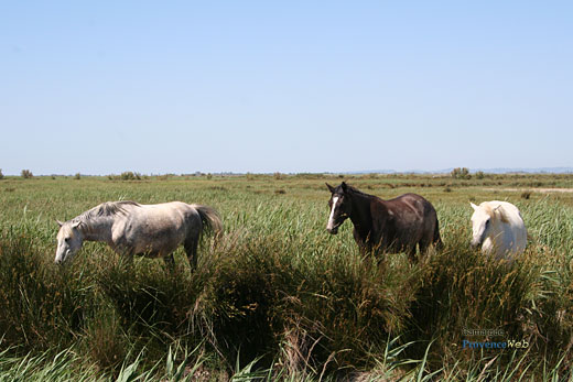 Photo Camargue